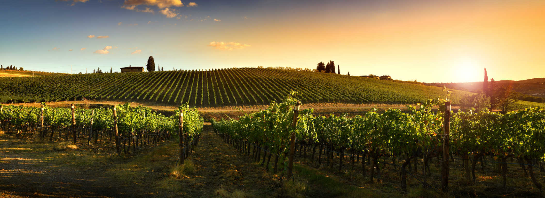 El vino se reinventa