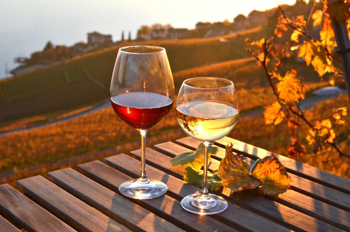 La cultura del vino