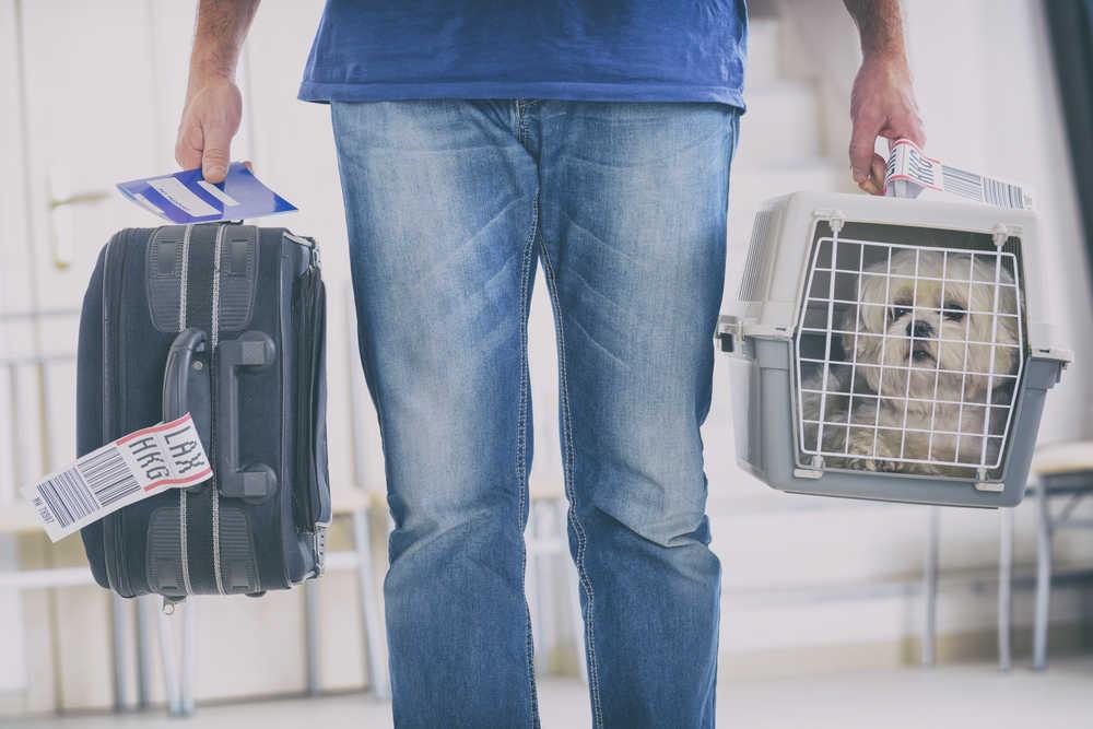 Viajar con perro en el avión